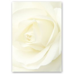 Motif Letter Paper! WHITE ROSE 20 sheets DIN A4